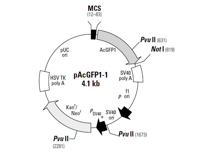 pAcGFP1-1 质粒图谱