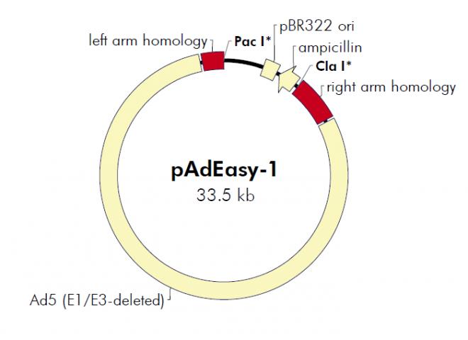 padeasy-1载体_质粒图谱