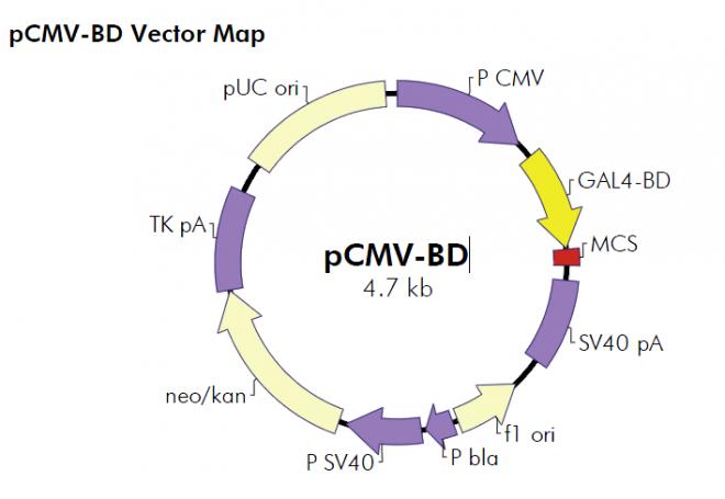 Fabulous pcmv vector pics