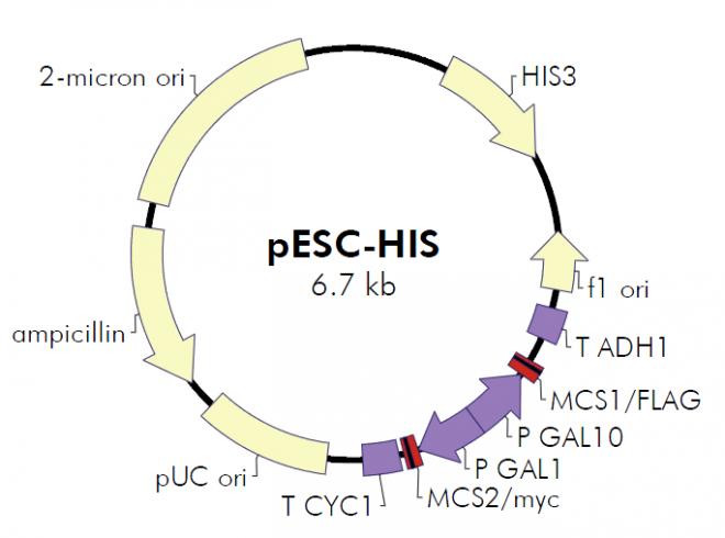 pESC-HIS质粒图谱