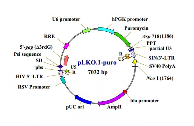 pLKO.1 puro 质粒图谱
