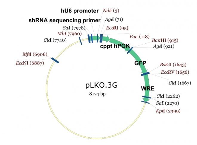 pLKO.3G 质粒图谱
