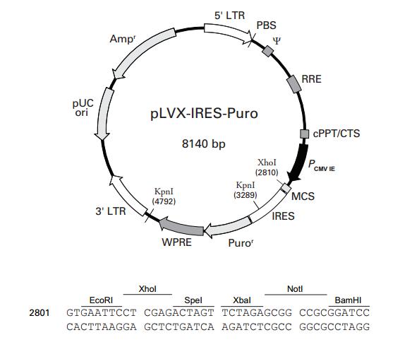 pLVX-IRES-Puro 质粒图谱