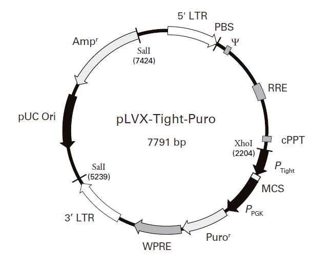 pLVX-Tight-Puro 质粒图谱