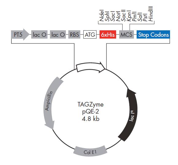 TAGZyme pQE-2 质粒图谱
