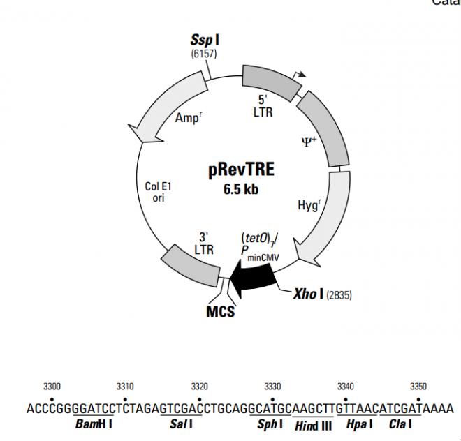 pRevTR 质粒图谱
