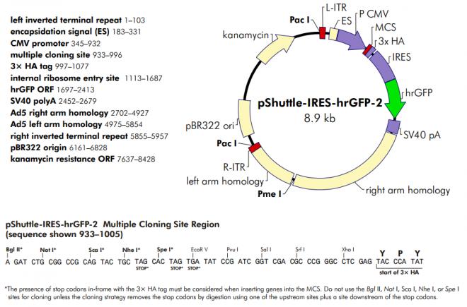 pShuttle-IRES-hrGFP-2 质粒图谱