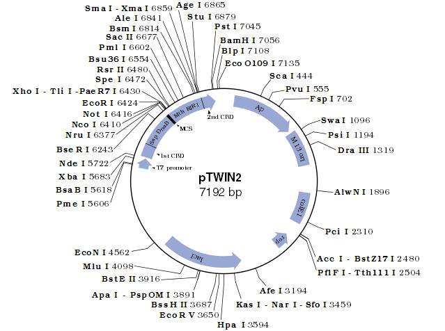 pTWIN2 质粒图谱