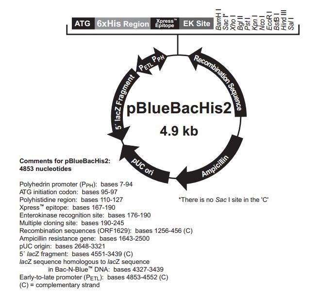 pBlueBacHis2 A,B,and C �|粒�D�V
