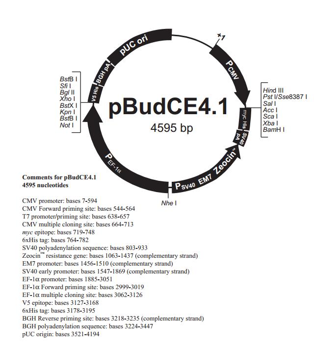 pBudCE4.1 质粒图谱