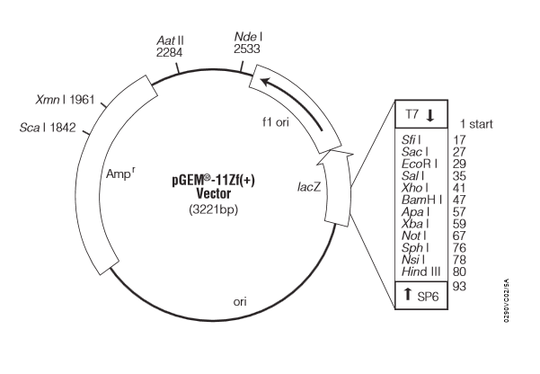 pEGM-11ZF(+)质粒图谱