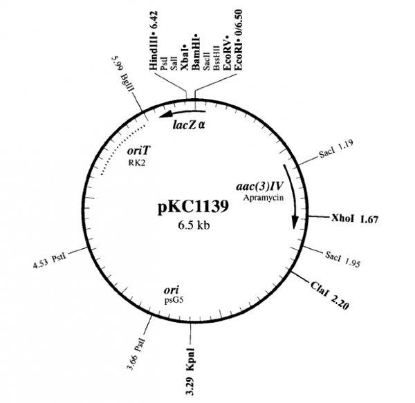 pKC1139质粒图谱