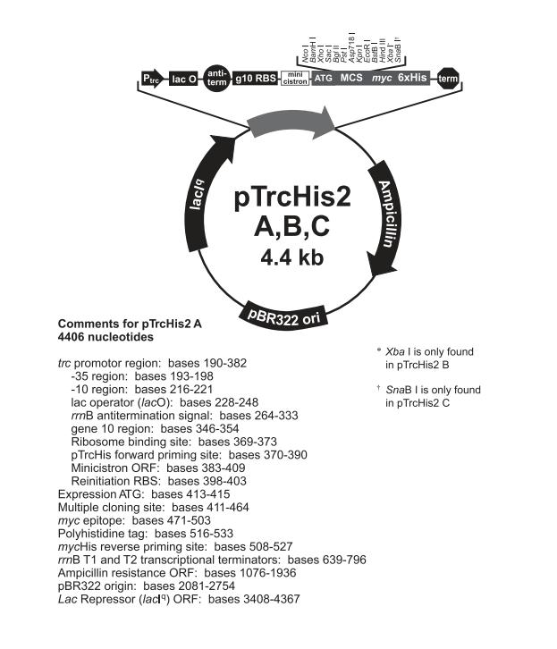 pTrcHis2 B 质粒图谱